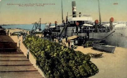 Receiving A Shipload of Bananas - Galveston, Texas TX Postcard