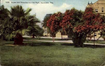 Palms in City Park - Galveston, Texas TX Postcard