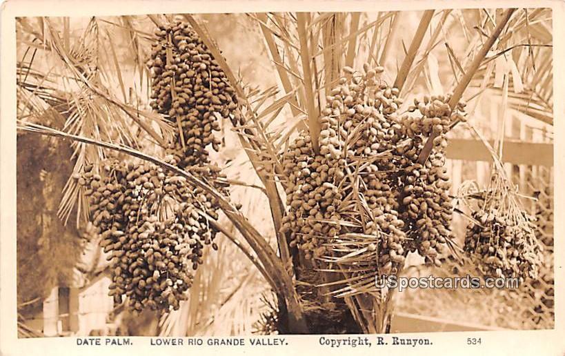 Date Palm - Lower Rio Grande Valley, Texas TX Postcard