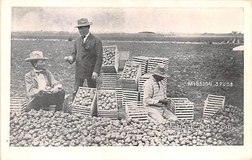 Potatoes - Mission, Texas TX Postcard