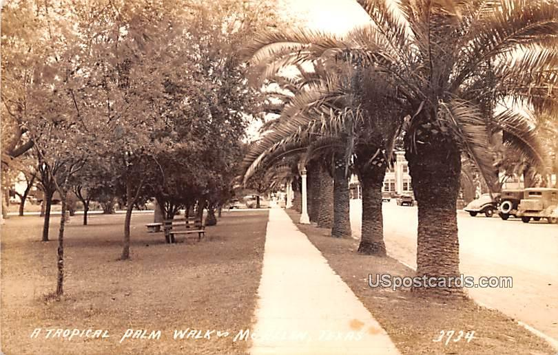 Tropical Palm Walk - McAllen, Texas TX Postcard