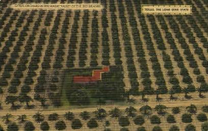 Citrus Orchard - Rio Grande Valley, Texas TX Postcard