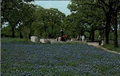 Lyndon B. Johnson's Statue - Misc, Texas TX Postcard