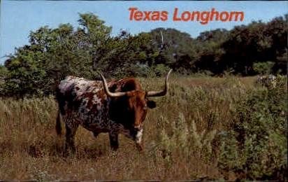 Texas Longhorn - Misc Postcard