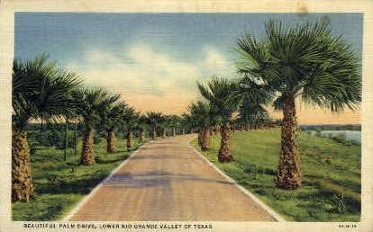 Palm Drive - Rio Grande Valley, Texas TX Postcard