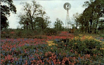 Splashes Of Color - Misc, Texas TX Postcard