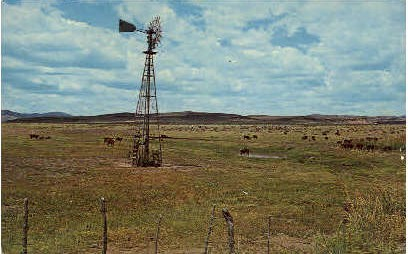 Texas Cattle and Watering Time - Misc Postcard