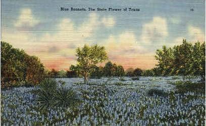 Bluebonnets - Misc, Texas TX Postcard