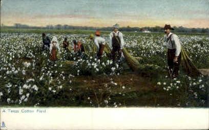 Cotton Field - Misc, Texas TX Postcard