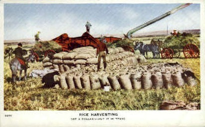 Rice Harvesting - Misc, Texas TX Postcard