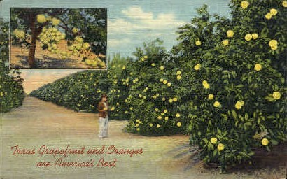 Texas Grapefruit and Oranges - Misc Postcard