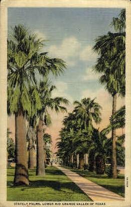 Stately Palms - Rio Grande Valley, Texas TX Postcard