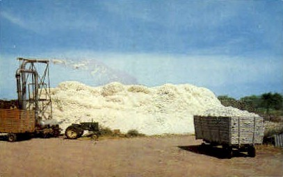 Cotton - Misc, Texas TX Postcard