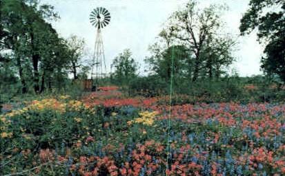 Wildlife - Misc, Texas TX Postcard