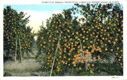 Orange Production - Rio Grande Valley, Texas TX Postcard