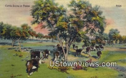 Cattle - Misc, Texas TX Postcard