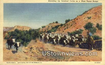 Hereford Cattle - Misc, Texas TX Postcard