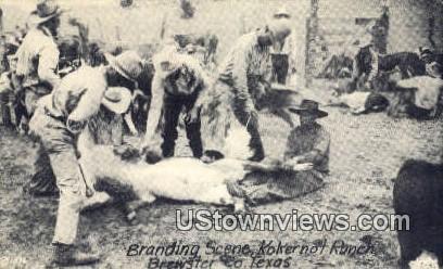 Branding, Kokernot Ranch - Brewster Co, Texas TX Postcard