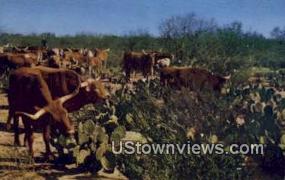 Texas Longhorns - Misc Postcard