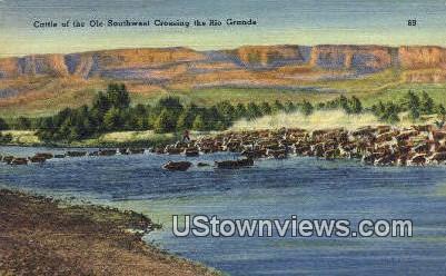 Cattle, Ole Southwest - Rio Grande, Texas TX Postcard