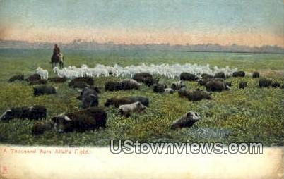 Alfalfa Field, TX     ;     Alfalfa Field, Texas Postcard
