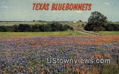 Blue Bonnets - Misc, Texas TX Postcard