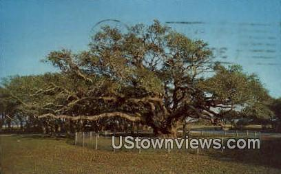Goose Island State Park - Rockport, Texas TX Postcard
