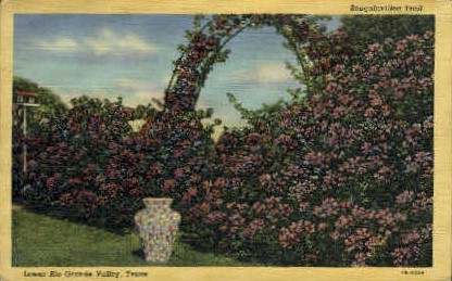 Bougainvillea Trail - Rio Grande Valley, Texas TX Postcard