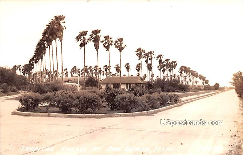 Tropical Palms - San Benito, Texas TX Postcard
