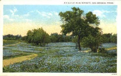 Bluebonnets, State Flower - San Antonio, Texas TX Postcard