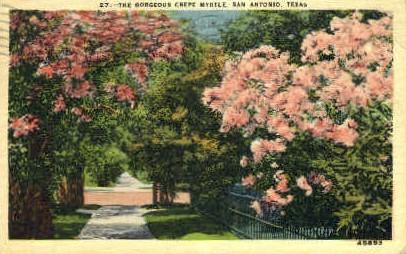Crepe Myrtle - San Antonio, Texas TX Postcard