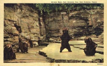San Antonio Zoo - Texas TX Postcard