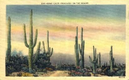 Giant Cacti - San Antonio, Texas TX Postcard