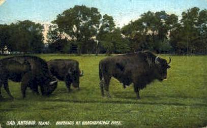 Buffalos ar Brackenridge Park - San Antonio, Texas TX Postcard