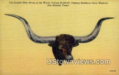 Largest Steer Horns - San Antonio, Texas TX Postcard