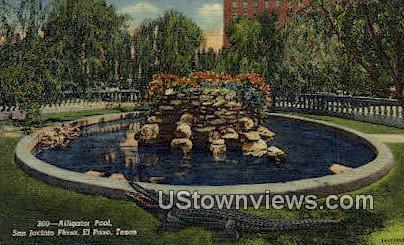 Alligator Pool, San Jacinto Plazas - El Paso, Texas TX Postcard