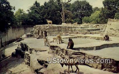San Antonio Zoological Gardens & Aquarium - Texas TX Postcard