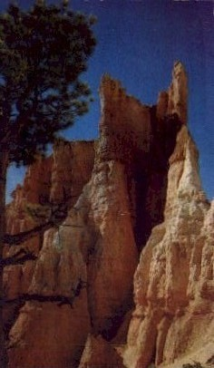 Bryce Canyon National Park - Utah UT Postcard