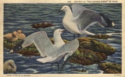 Sea Gulls - Misc, Utah UT Postcard