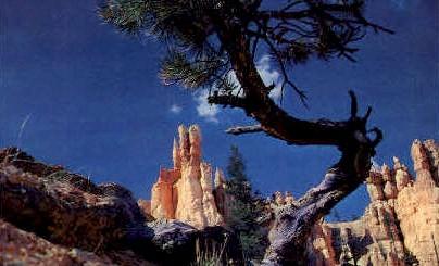 Queens Garden  - Bryce Canyon, Utah UT Postcard