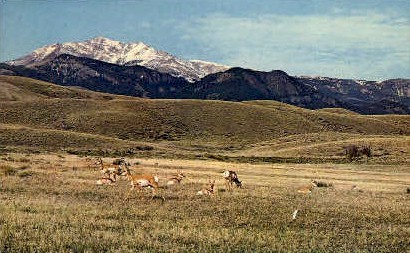 Home on the Range - Misc, Utah UT Postcard