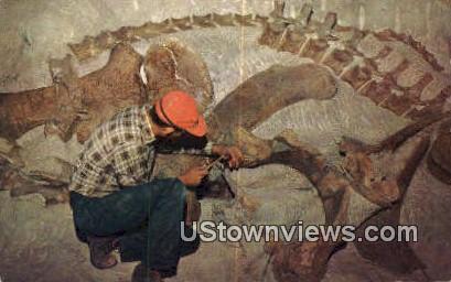 Reliefing Fossil, Dino National Monument - Northeast Utah Postcards, Utah UT Postcard
