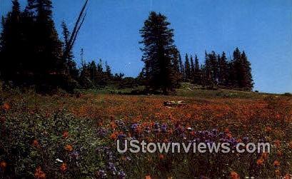 Cedar Breaks National Monument, Utah     ;     Cedar Breaks National Monument, UT Postcard