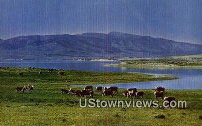 Cattle - Misc, Utah UT Postcard