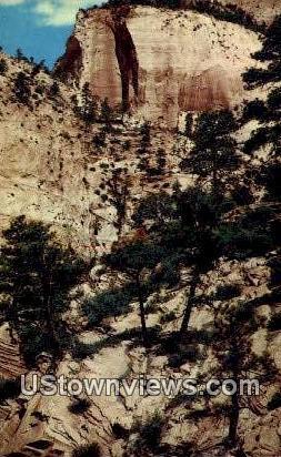 Big Trees, Rocks - Zion National Park, Utah UT Postcard