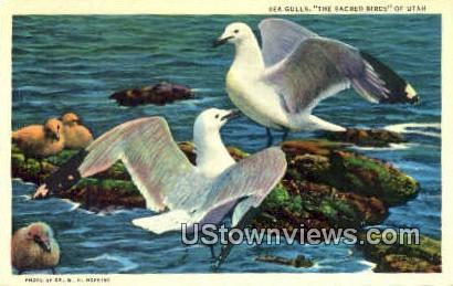 Seagulls - Misc, Utah UT Postcard