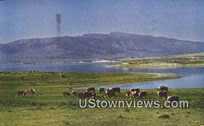 Cattle - Salt Lake City, Utah UT Postcard