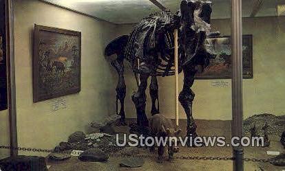 Skeleton of Uintatherium - Vernal, Utah UT Postcard