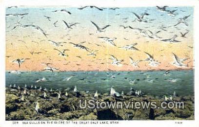 Sea Gulls - Great Salt Lake, Utah UT Postcard