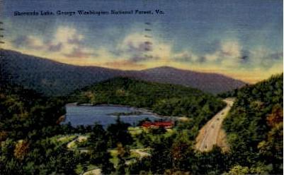 George Washington National Forest - Wainsboro, Virginia VA Postcard